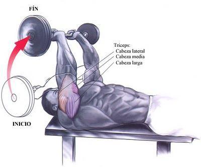 Musculos-pesas