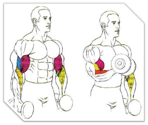 biceps-mancuernas