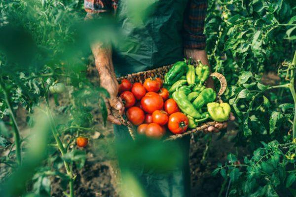 Cuales son las verduras que se pueden comer crudas y que beneficios tienen 3