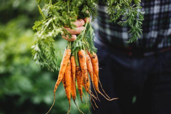 Cuales son las verduras que se pueden comer crudas y que beneficios tienen 4