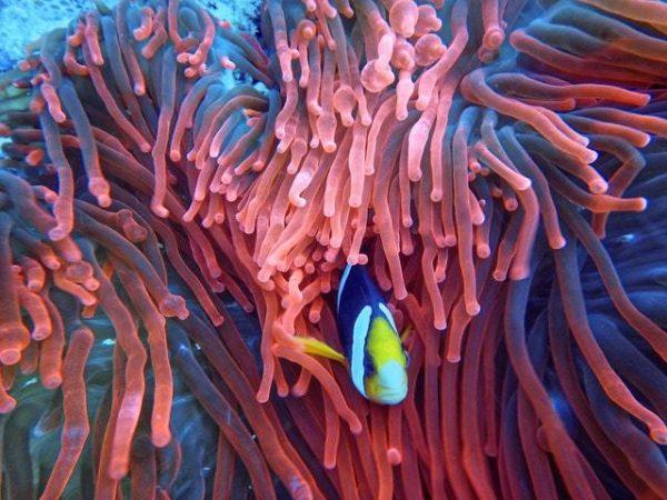 ¿Qué es el Buceo? Cuáles son los tipos y qué se necesita animales marinos