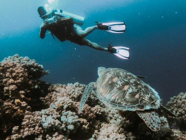 ¿Qué es el Buceo? Cuáles son los tipos y qué se necesita recreativo