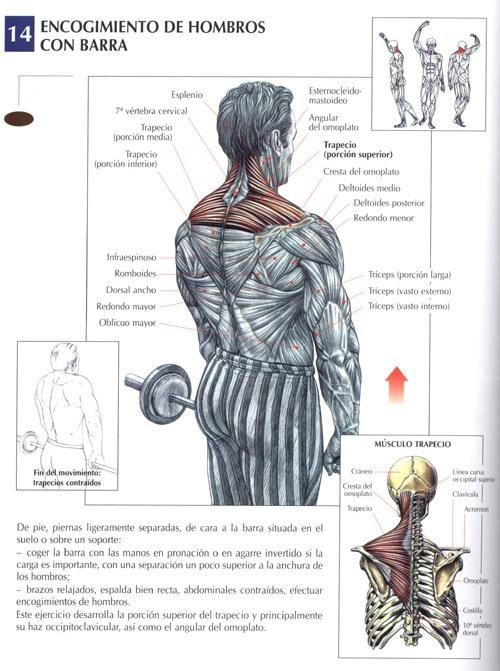 Encogimiento de hombros con barra rutinasentrenamiento - Barras de ejercicio para casa ...
