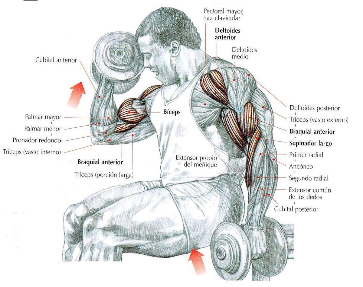 Curl-de-Biceps-Alternos-Supinación