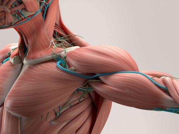 El colageno con magnesio calcio para huesos y musculos