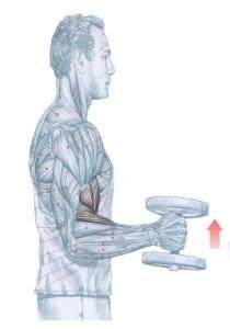 http://rutinasentrenamiento.com/wp-content/uploads/curl_biceps_alterno_martillo-210x300.jpg