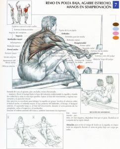 http://rutinasentrenamiento.com/wp-content/uploads/ejercicios-dorsales-242x300.jpg