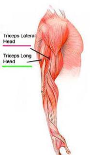 http://rutinasentrenamiento.com/wp-content/uploads/ejercicios-triceps.jpg
