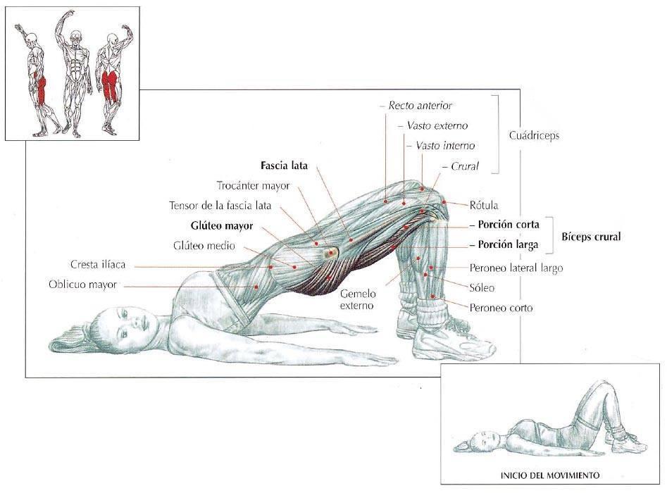 Elevación de la pelvis en el suelo - RutinasEntrenamiento