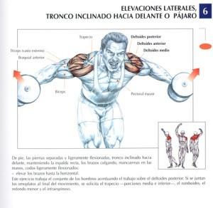 http://rutinasentrenamiento.com/wp-content/uploads/elevaciones-laterales-tronco-inclinado-hacia-delante-o-pajaro-300x292.jpg