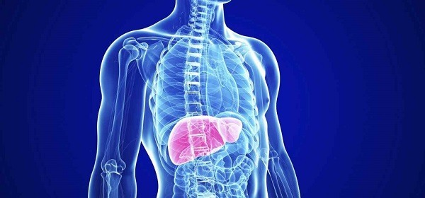 funciones hepaticas