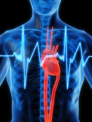 los-efectos-secundarios-de-la-l-carnitina-taquicardia