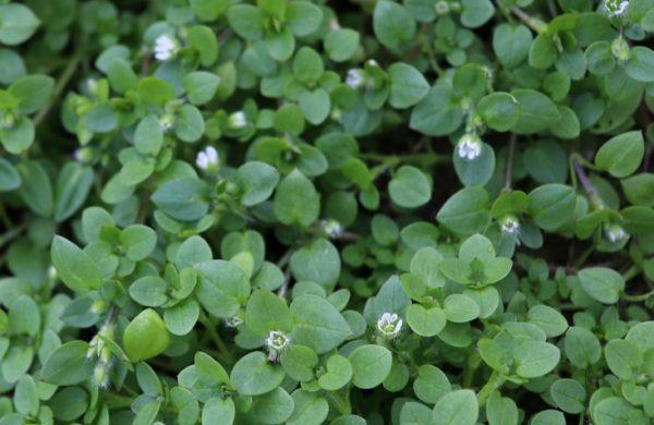 Mejores plantas domesticas para anadir dieta pamplina