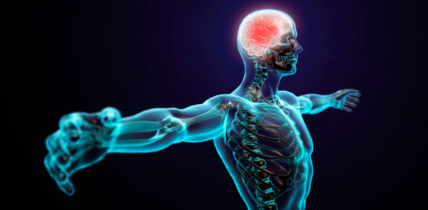 oxido-nitrico-como-actua-sistema-nervioso