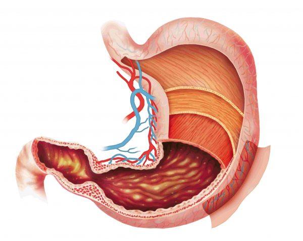 oxido-nitrico-contraindicaciones-digestion
