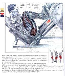 http://rutinasentrenamiento.com/wp-content/uploads/prensa-de-piernas-inclinada-257x300.jpg