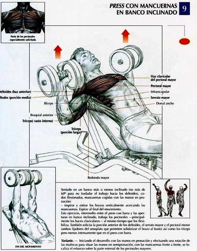 Los pechos con anatómico implantami