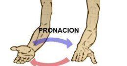 Curl de Bíceps Alternos con Supinación