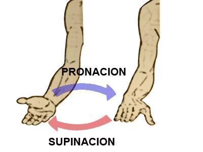 Curl de Bíceps Alternos con Supinación - RutinasEntrenamiento