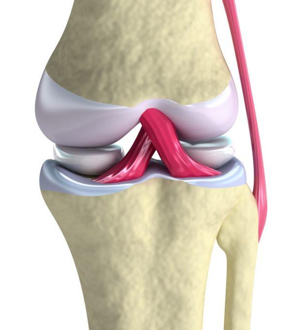 Que es el colageno ligamentos